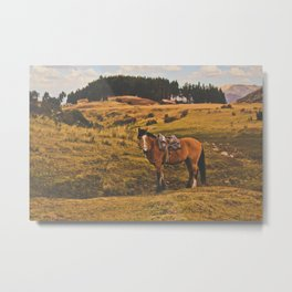 Horse among the sacred fields (Cusco, Peru) Metal Print