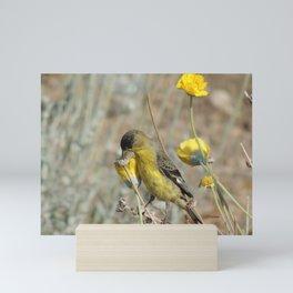 Mr. Lesser Goldfinch Feeds on Seeds Mini Art Print