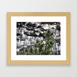 Spring Thistles Framed Art Print