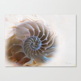 Natural spiral Canvas Print