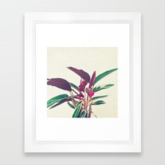 Prayer Plant Framed Art Print