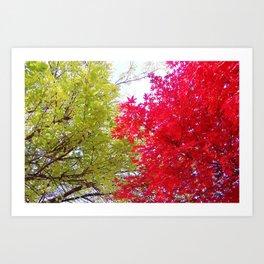 Competing Fall Trees Art Print