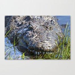 African Crocodile Canvas Print