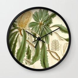 Banksia integrifolia (Coast Banksia) 1827 Wall Clock