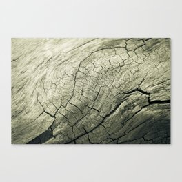 Elephant Wood of Smoothness Canvas Print