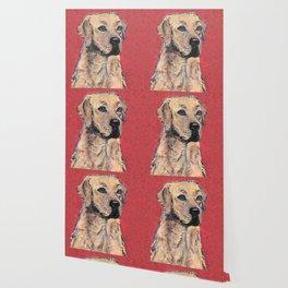 Labrador Retriever Portrait Wallpaper