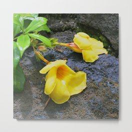 Tropical Yellow Flowers in Repose on Ocean Rocks Metal Print