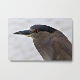 Adult Dusky Black Crowned Night Heron by Reay of Light Metal Print