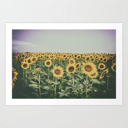 Sunflower Horizon Art Print