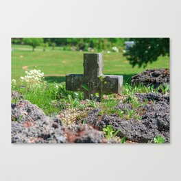 Alpine flower Canvas Print