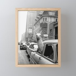 Llama Riding in Taxi, Black and White Vintage Print Framed Mini Art Print