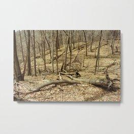 Effigy Mounds 2 Metal Print