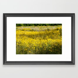 Field of Gold No.1 Framed Art Print