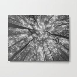 Smoky Mountain Summer Forest XI - National Park Nature Photography Metal Print