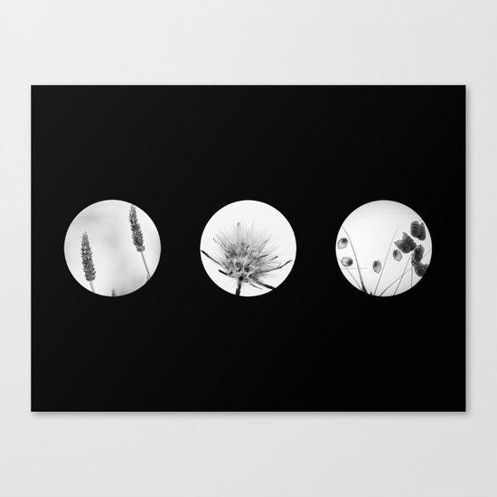 trio of flowers  Canvas Print