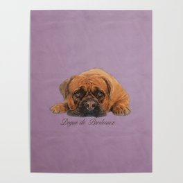 Dogue de Bordeaux Sketch Digital Art Poster