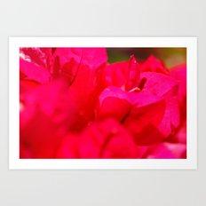 Pink bougainvilleas Art Print