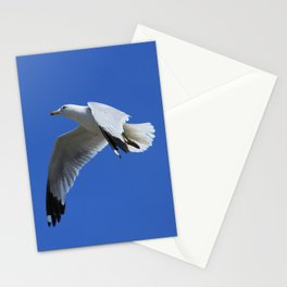 Ring-Billed Gull in Flight Stationery Cards