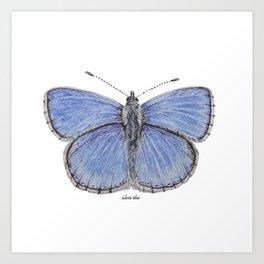 Adonis Blue Butterfly Art Print
