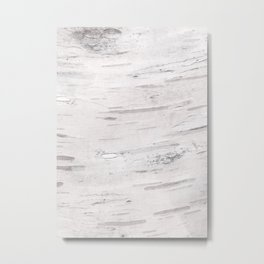 White Birch Wood Metal Print