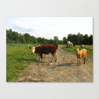 cows Canvas Prints featuring Cows by Emily Elizabeth Reichmann