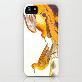 Buff-breasted Sandpiper Bird iPhone Case