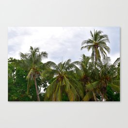 Palm Trees in the Sky Canvas Print