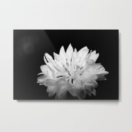 Cornflower black and white Metal Print