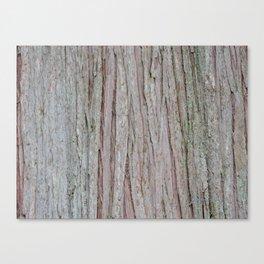TEXTURES --  Cedar Bark Canvas Print