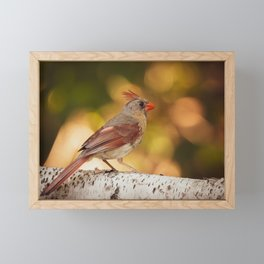 Female Northern Red Cardinal Framed Mini Art Print
