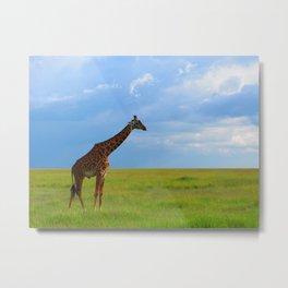 Lone giraffe Metal Print