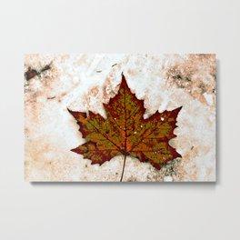 Brown and green leaf  Metal Print