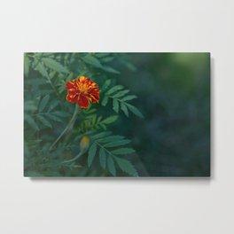 Flowers Tagetes Metal Print