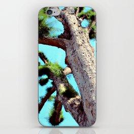 The Tree iPhone Skin