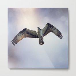 Osprey with Fish Metal Print