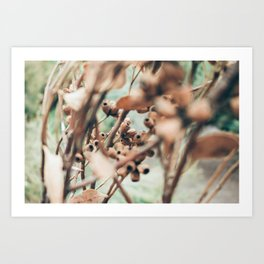 Gumtree Art Print
