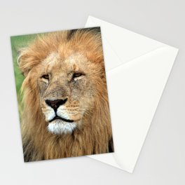 Masai Mara Lion Portrait Stationery Cards