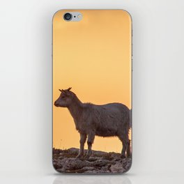 Goat baby sunset E5-5789 iPhone Skin