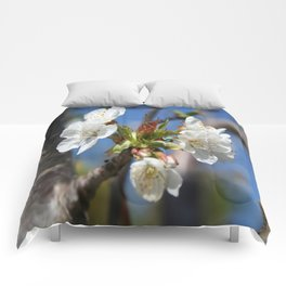 Cherry Blossom In Spring Sunlight Comforters