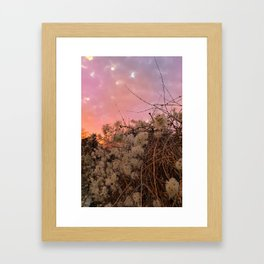 Winter Sunset And Clematis Vines Framed Art Print