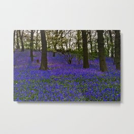 Bluebell Carpet Metal Print
