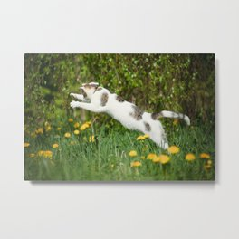 Cat, bumble-bee and dandelions Metal Print