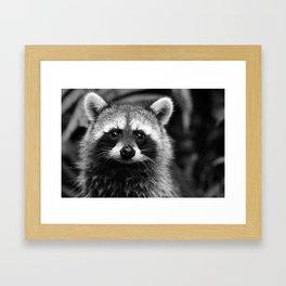 Racoon B & W Framed Art Print