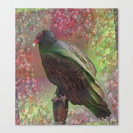 Tantalizing Turkey Vulture Canvas Print
