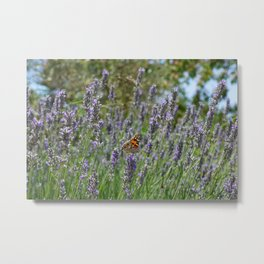 Lavender and Orange Butterfly Metal Print