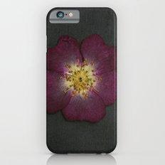 Pressed Wild Rose iPhone 6s Slim Case
