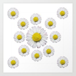 ALL WHITE SHASTA DAISY FLOWERS ART Art Print