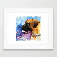 boxer Framed Art Prints featuring Boxer by oxana zaika