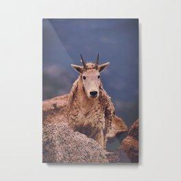 Little Goat II Metal Print