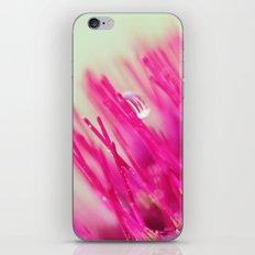 Star Burst iPhone & iPod Skin